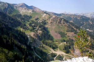 Alta Fights to Stop Bark Beetles