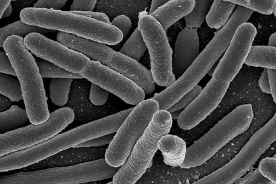 How Microbes Help Make Us Human - KCPW