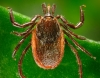 Is Lyme Disease in Utah?